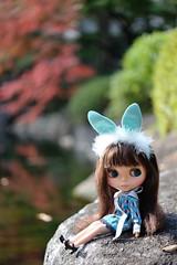 Rabbit to dream*
