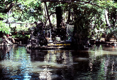 Hawaii Vacation - September 1983 (rjl6955) Tags: hawaii honolulu 1983 hiltonhawaiianvillage wakiki rainbowtower