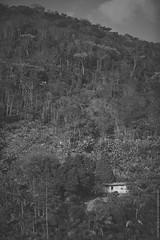 Casa e Mata (_MG_0365) (Paulo Henrique Zioli) Tags: wood red brazil bw house plant tree fall texture textura luz water brasil de casa rainforest bresil selva pb estrada da ip paulo serra floresta cachoeira