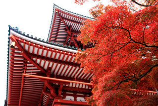Autumn Leaves with Great Pagoda of Peace, Naritasan Shinshoji Temple