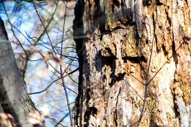 Thousand Acre Nature Preserve - November 25, 2014