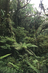 Montane rainforest, Montagne d'Ambre National Park, Madagascar