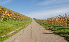 The path in the vineyards. (andreasheinrich) Tags: november autumn germany deutschland nikon path herbst hills berge vineyards weg weinberge southgermany neckarsulm scheuerberg d7000