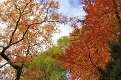 Farbenpracht (PhilippSpringer) Tags: autumn fall herbst basel farbenpracht baslerrheinpromenade