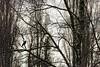 Maitre corbeau (prenzlauerberg) Tags: bird nature schweiz switzerland nikon suisse corneille dxo arbre oiseau yverdon 2014 yverdonlesbains nikoncapturenx nikon70200mmf28 nikond610