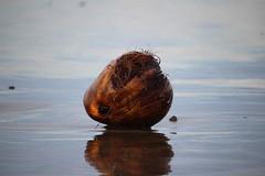 IMG_0728 (JoanZoniga) Tags: ocean morning reflection beach water beautiful sand coconut cr jacobeach