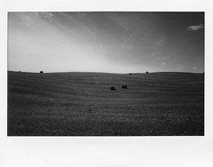 (spacephoenix) Tags: blackandwhite bw film vintage landscape photography wide instant analogue lithuania instax 210