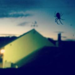 Spider (Daniel James Greenwood) Tags: mobilephone mobilephonephotos instagram instagramphotography nokialumia
