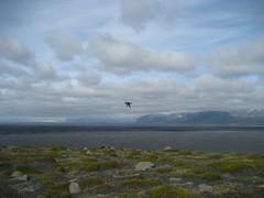 IMG_6301 (b_m_travel) Tags: cliff island iceland puffin mwe klippen papageientaucher ingolfshfdi