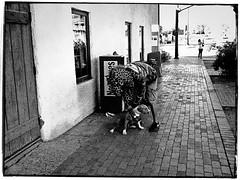 tempe 027645 (m.r. nelson) Tags: arizona urban blackandwhite bw usa southwest america streetphotography az tempe urbanlandscape artphotography negroyblanco mrnelson newtopographics nbiancoenero schwarzaufweis noirsurblanc markinaz
