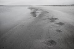 Horseshoe Crabs (Beth Reynolds) Tags: beach dawn cape horseshoe crabs