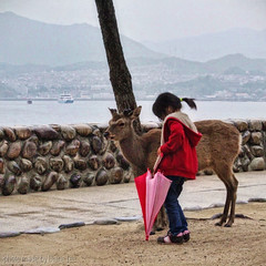 Oh deer… (Photoleeshus) Tags: travel seascape japan travels hiroshima deer miyajimaisland miyajima hdr travelphotography