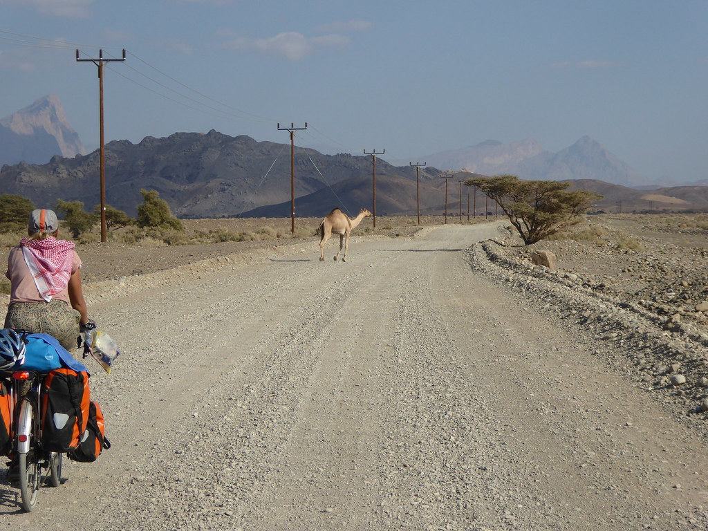 Chasing Camels