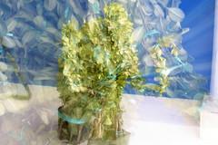 Elefante Zoomeado (Jos Ramn de Lothlrien) Tags: flores lens hojas flora natural flor lente belleza zooming efecto