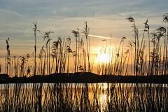 opkomende zon bij kreek Westkapelle (Omroep Zeeland) Tags: vogels natuur zeeland zee duinen zon meeuw westkapelle weer walcheren gebied opkomende