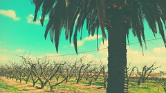 Parcela (carmennoficial) Tags: primavera arboles palmeras campo familiar extremadura tranquilidad 2016 huawei