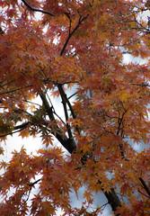 Wet and wild (Jutta Sund) Tags: autumn rain wind orange