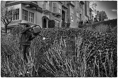 What's Going On Down There? (Rolf Siggaard) Tags: sanfrancisco street people bw woman monochrome blackwhite candid environmental social c1 captureone mirrorless niksilverefexpro2 fujix100s 23mmapsc