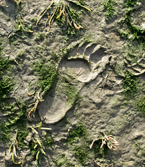 - mud footstep - (Jac Hardyy) Tags: sea foot spur wadden sand toes track toe mud zeh tracks flats human tidal footprint imprint watt footstep mudflat schlamm schlick matsch mensch zehen wattenmeer fus zehe abdruck tritt fusabdruck trittsiegel