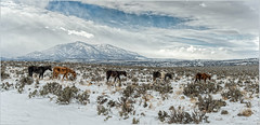 Wild Horses  _6004305 (BlueberryAsh) Tags: park winter wild horses usa snow mountains animals clouds landscape nikon state wildlife historic moab wildhorses newspaperrock snowcappedmountains nikond600 utay