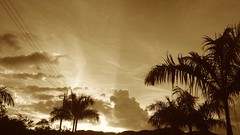 Sepia Palm Trees Siluet Resplandor Amanecer Colombia (nathaliacl10) Tags: sepia colombia amanecer palmtrees siluet resplandor