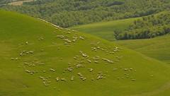 pastorale toscane (jean-marc losey) Tags: primavera italia vert toscana toscane printemps italie pr d700 pastoralisme