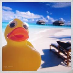I feel good in Malindi :) (Angelo Trapani) Tags: duck viaggio malindi papero ducktales avventura