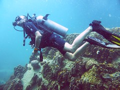 Koh Tao (Scuba Diving), Thailand (Jan-2016) 14-093 (MistyTree Adventures) Tags: ocean sea water coral thailand twins marine asia seasia underwater outdoor diving scubadiving diver kohtao gulfofthailand scubadiver panasoniclumix