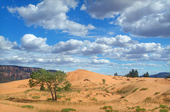 DSC_0574 coral pink sand dunes hdr 850 (guine) Tags: coralpinksanddunes coralpinksanddunesstatepark dunes sanddunes sand plants grass clouds tree hdr qtpfsgui luminance