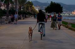 Sitges.Catalonia. (Natali Antonovich) Tags: dog animal seaside spain lifestyle catalonia promenade seashore sitges seasideresort seaboard