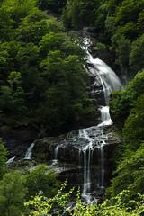 Wild Forest, Val Verzasca (Laura Rabachin) Tags: trees wild forest switzerland waterfall cascata valverzasca wildforest