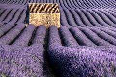 Provence #1 (Visual Lyrics Photography - Ernie Vater) Tags: purple lavender hut rows provence