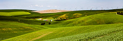Tucked Away (Culinary Fool) Tags: palouse usa washington windfarm 2016 windmill culinaryfool crops power wa brendajpederson travel rollinghills photography roadtrip wheat farm ranch may hills travelwa 2470mm28