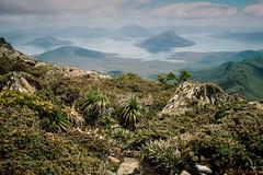 Mt. Anne K10 (mckenart) Tags: mountains trekking australia bushwalking tasmania kodachrome wilderness southwestwilderness mtanne