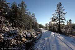 20141206068131 (koppomcolors) Tags: winter forest vinter sweden skog sverige scandinavia värmland varmland koppomcolors