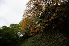 (ddsnet) Tags: travel plant japan sony autumnleaves 99  nippon  kansai  autumnal nihon  slt backpackers     wakayamaken      wakayamashi  singlelenstranslucent 99v