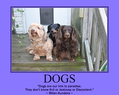 poster frank fdsflickrtoys dachshund link jimmydean