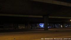 Common Swift (Apus apus) Massive Roost under King Fahd Highway/Jeddah-Makkah Expressway (Steve Arena) Tags: bird call massive swift jeddah calling saudiarabia calls roost apusapus commonswift twitter twittering kingfahdhighway southjeddah