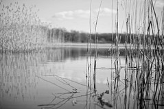 DSC06006 (JohnnyKa$h) Tags: bw white lake black water reflections 50mm sony sel nex 50f18 5n