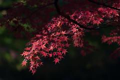 NDF_3456 (alfa-tipo33) Tags: autumn digital nikon autumncolors  fx  d800 afs70200mmf28g