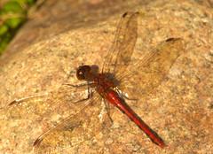 Enjoying the Sun (haidarism (Ahmed Alhaidari)) Tags: sun nature insect rays حشرة طبيعة الشمس أشعة حشرات