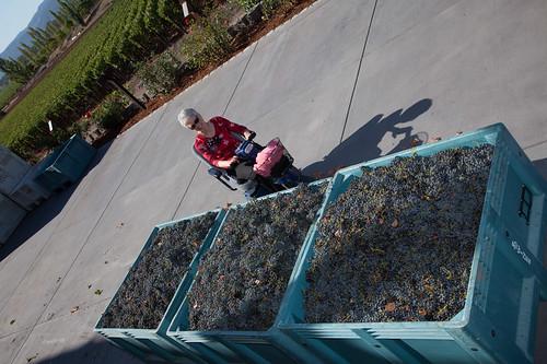 ZD Winery crush season - Napa, CA
