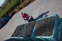 ZD Winery crush season - Napa, CA (incredibleaccessible) Tags: travel vacation tourism cane ada vineyard wine wheelchair country sonoma winery walker grapes napa tasting handicap crush incredible physical disability accessibility accessible compliant zd incredibleaccessible