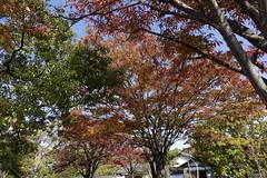 (ddsnet) Tags: travel plant japan sony cybershot autumnleaves  nippon   autumnal nihon  backpackers        rx10  hygoken