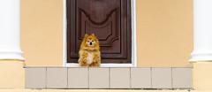 DLB1118Copy_2 (artzubi) Tags: ireland house dogs report eire symmetry irlanda etxea txakurrak simetria erreportajea codonegalarranmoreisland