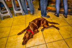 Take a break Jazz Dog. (migueldunham) Tags: music mexico morelia jazz michoacan mikedunham