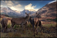 Scotland landscape ...meeting with deer (annabulka) Tags: show uk greatbritain travel light shadow mountain mountains color colour green art love tourism nature beautiful animal animals contrast dark landscape photography scotland photo amazing nice fantastic construction travels flickr shot natural earth live wildlife fine tourist best lonelyplanet colourful capture beautifull turist colourfull mywinners anawesomeshot colorphotoaward colourartaward colorfullaward annabulka studio999 annamarijabulka