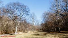 Warner Parks Walkabout - January 17, 2014 (mikerhicks) Tags: winter usa geotagged unitedstates nashville hiking tennessee percywarnerpark warnerparks vaughnsgap canon7dmkii iroquoismeadows geo:lat=3606330333 sigma18250mmf3563dcmacrooshsm geo:lon=8687937000