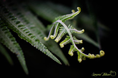 Come To Life (meepeachii) Tags: green plants plant fern nature lowkey grün pflanzen farn natur