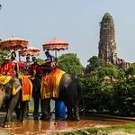 Elefantes en Wat Phra Ram thumbnail